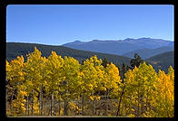 Aspens against the Mountains.  Colorado.