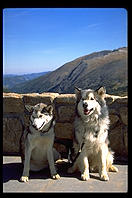 Raven and Kiva, Malamutes of Distinction.  Rocky Mountain National Park, Colorado.