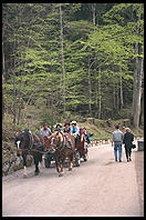 Horse Carriages taking tourists up to Neuschwanstein (King Ludwig II's great castle in Bavaria).