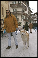 An Akita in downtown Cortina