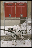 Mailboxes and a Dalmatian, in Cortina
