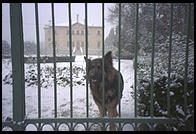 A dog in the snow in Vicenza, Italy.
