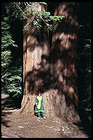 Sequoia.  Kings Canyon National Park.  California.