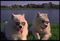 A Future So Bright You Ll Need To Wear Sunglasses
