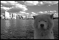 George by the Charles River Basin