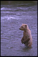 Katmai National Park (Alaska)