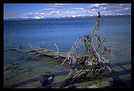 Driftwood on the shore of Yellowstone Lake