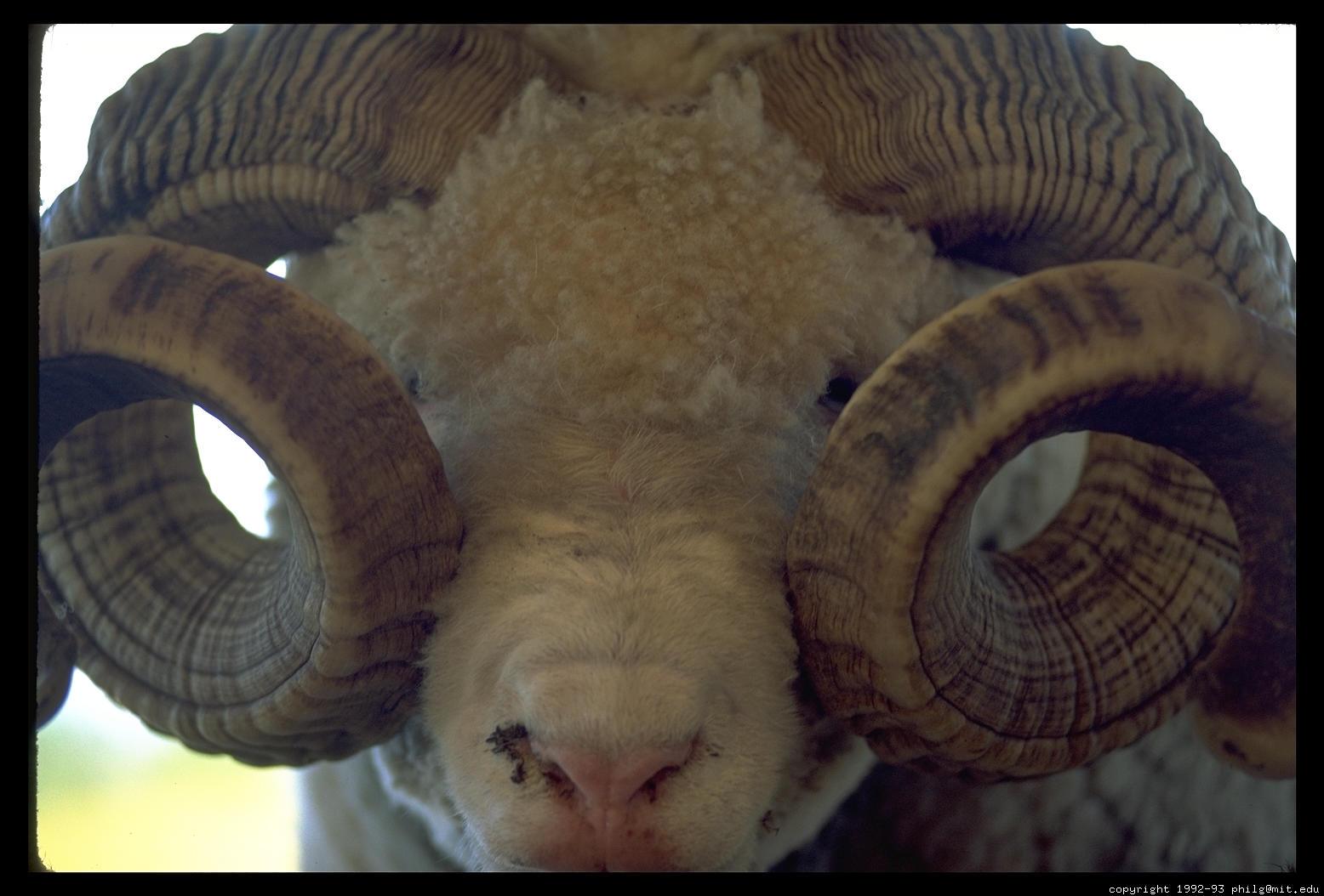 how to make vriska horns