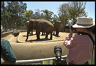 Elephant hunting at the zoo with a Nikon 300/2.8 AF lens (comes in its own suitcase; costs and weighs about as much as a good used car).