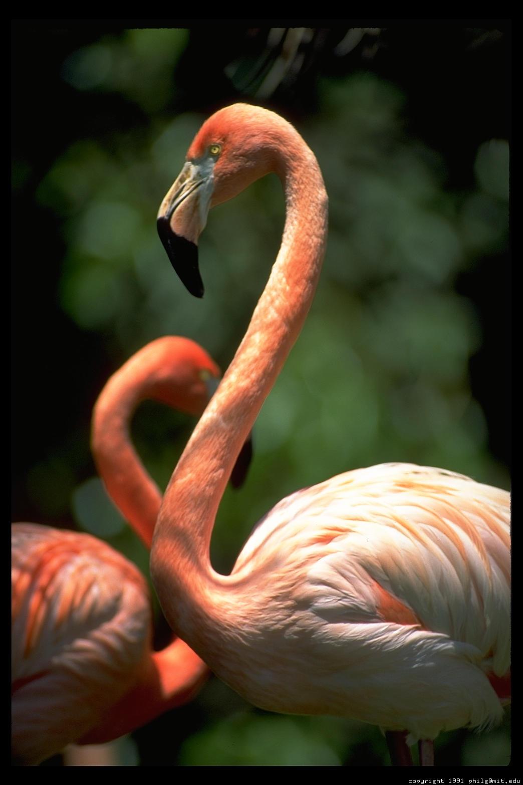 http://philip.greenspun.com/images/pcd1647/flamingo-double-19.4.jpg