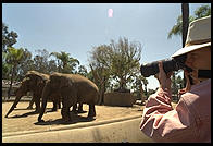 Susan takes an elephant photo at the zoo with her own Nikon and my comparatively puny 80-200/2.8 lens
