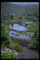 Swamp.  Mt. St. Helens (Washington State) in 1993