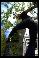 Elke in a tree. Victoria, British Columbia 1993.