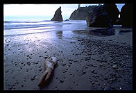 Ruby Beach. Olympic National Park (Washington State)
