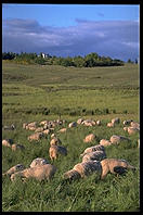 Sheep Research Center.  Corvallis, Oregon