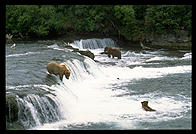 Overview of Brooks Falls, Katmai National Park (Alaska)