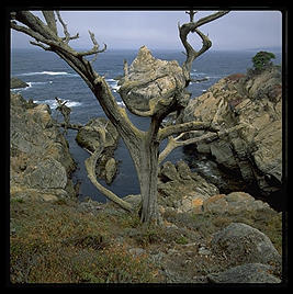 Point Lobos.  California.
