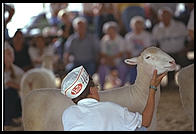 Sheep at the New Jersey State Fair 1995.  Flemington, New Jersey.