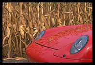 Porsche and corn.  Pennsylvania.