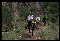 Mule train coming into Phantom Ranch.  Grand Canyon National Park.