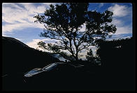 NSX and Tree.  Morning.  Big Sur, California.