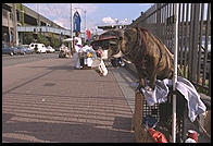 Dog begging (with a Starbucks cup) for his master.  Seattle, Washington