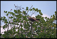 Osprey Nest. Everglades National Park