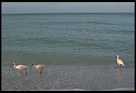 Morning on the beach at Sanibel Island, Florida