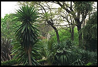 Real Jardin Botanico.  Madrid, Spain
