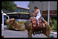 Tourist camel rides in Jericho