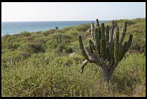 Digital photo titled villa-faro-cactus