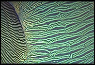 Side of a fish.  Great Barrier Reef.  Australia.