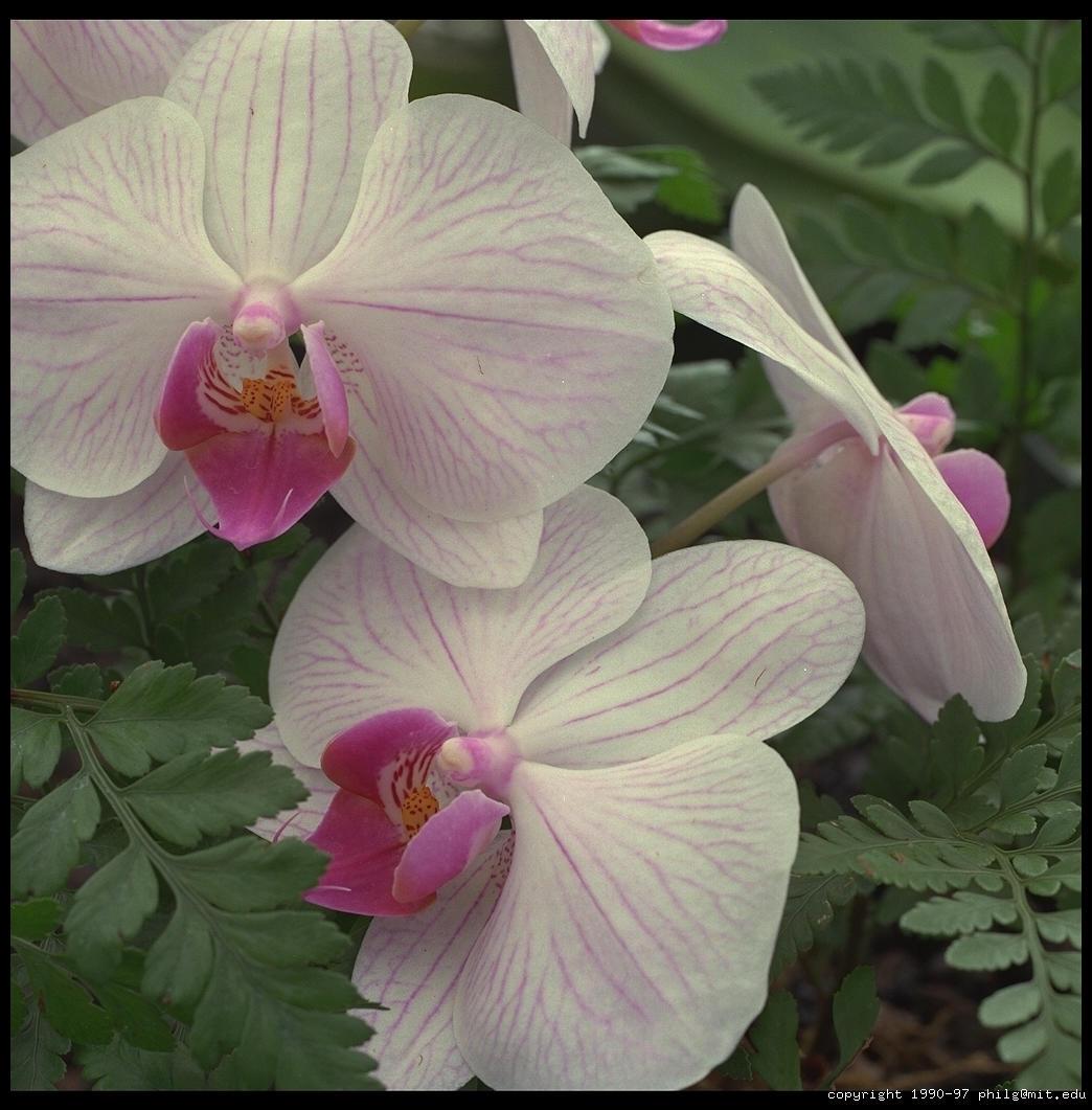 Photographs of flowers in hawaii big island hawaii 1990 izmirmasajfo