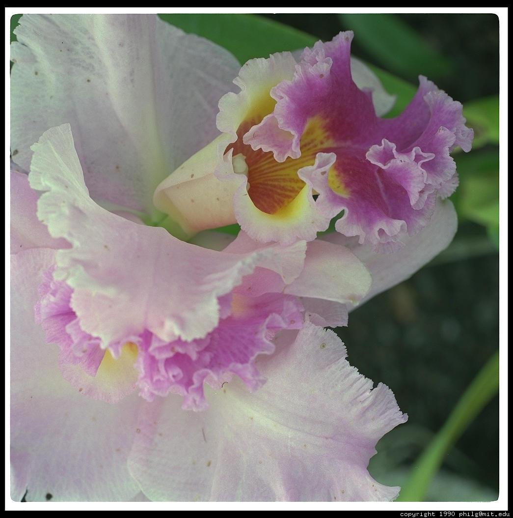 Photographs of flowers in hawaii hawaii izmirmasajfo Image collections